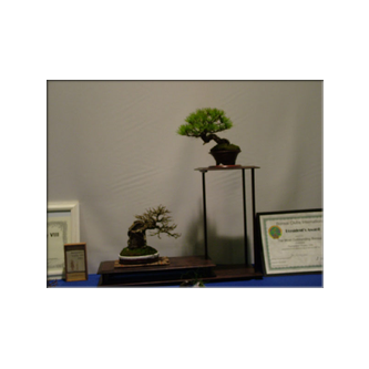 Marc Noelanders Bonsai Trophy