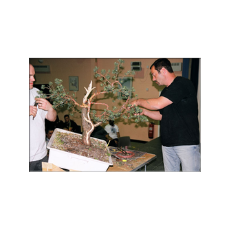 Kevin Willson Spirit of Bonsai 2004