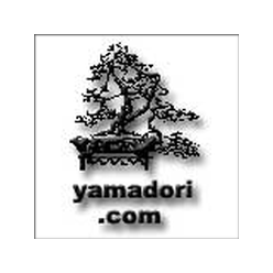 Yamadori for Sale